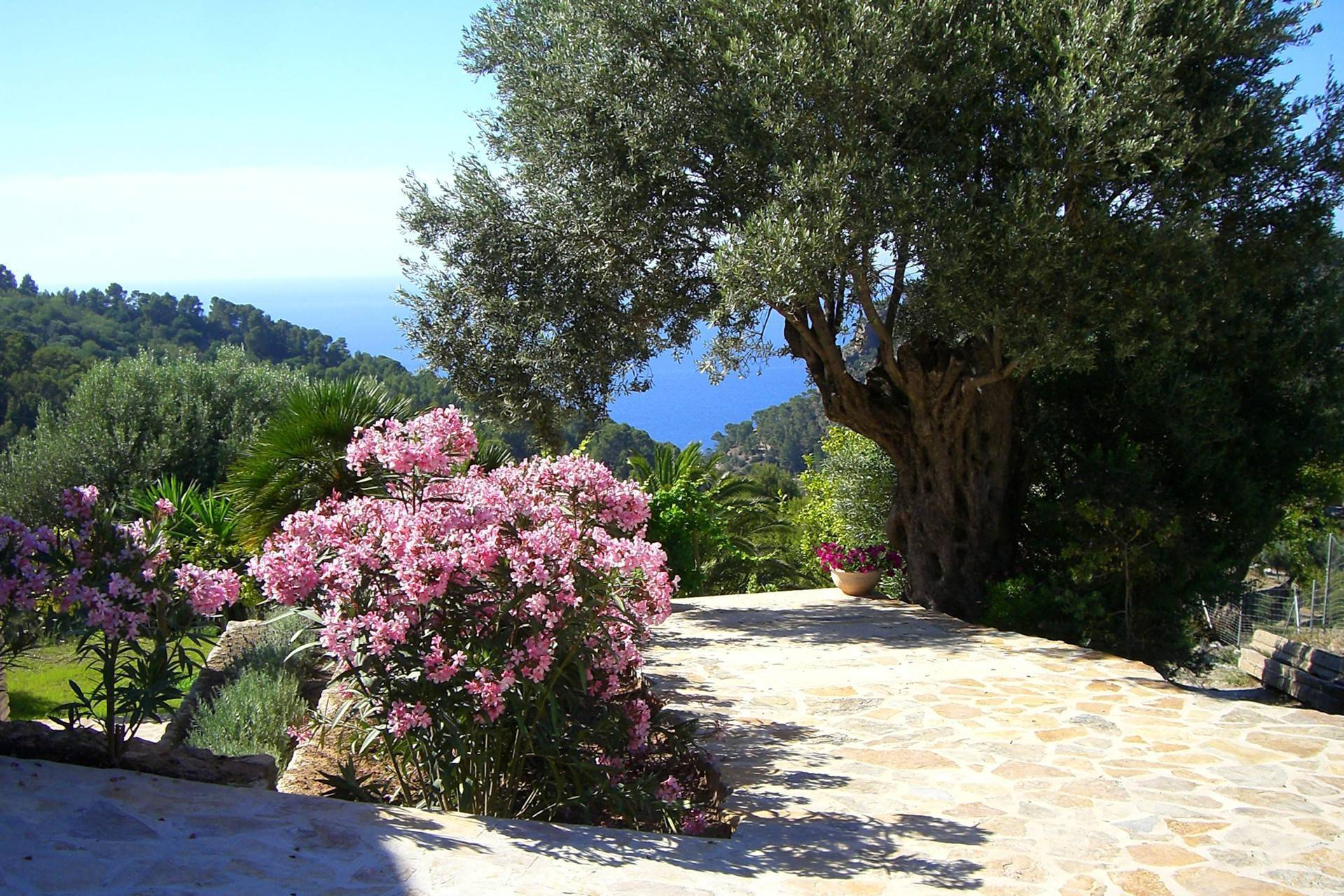 01-254 Meerblick Finca Mallorca Westen Bild 3