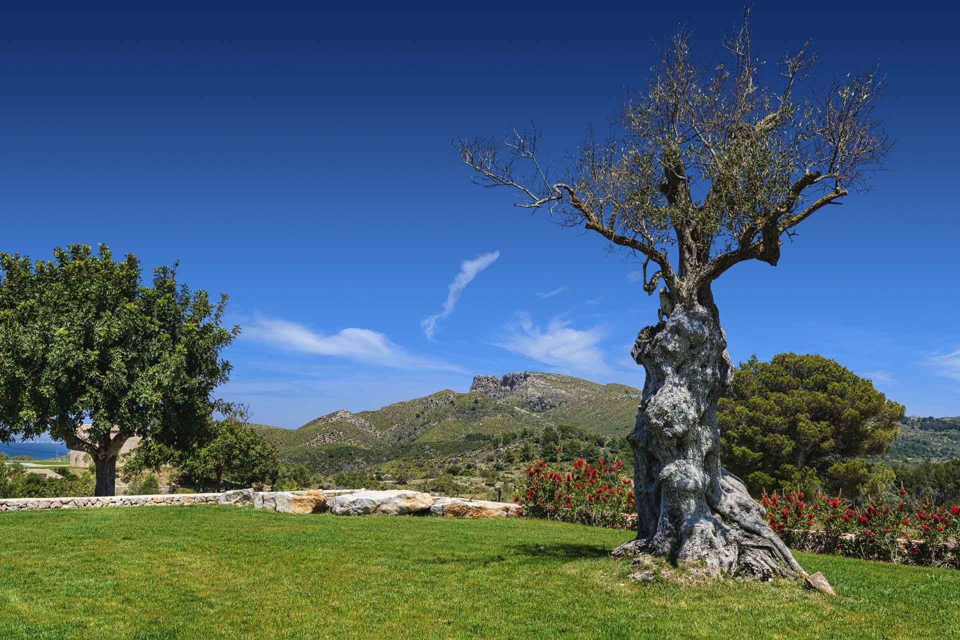 01-307 Design Finca Mallorca Nordosten Bild 4