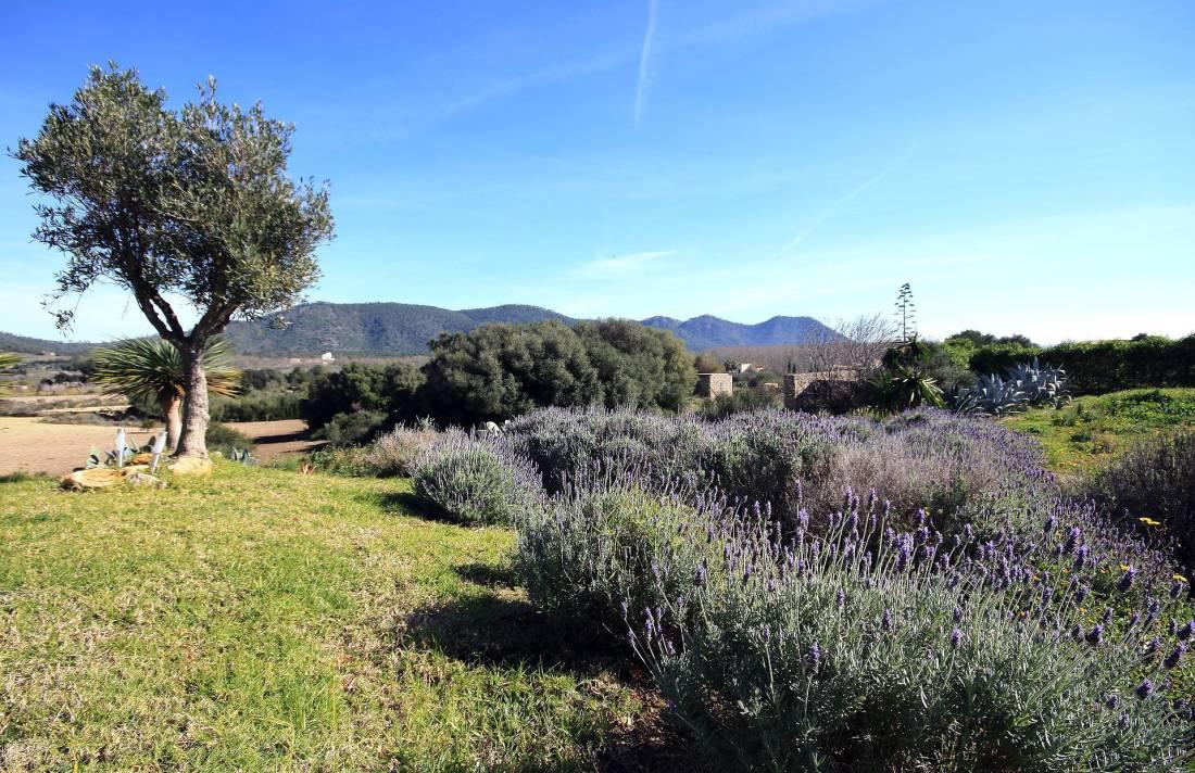 01-94 Elegante Finca Mallorca Nordosten Bild 6