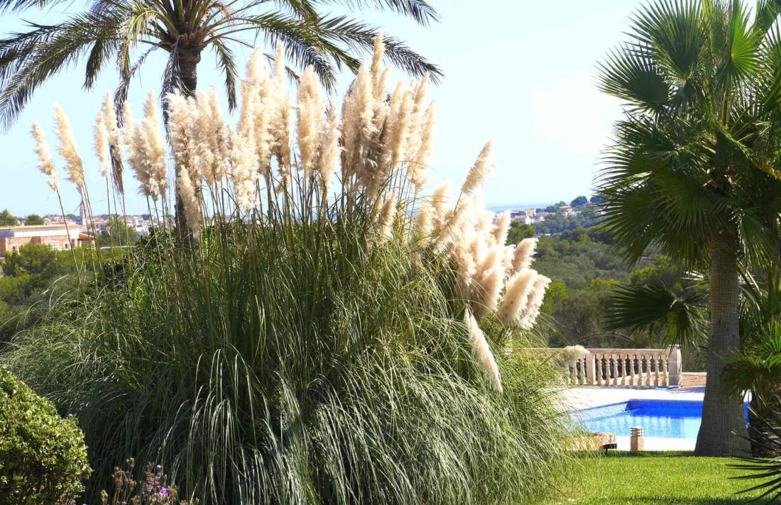 01-319 riesige luxus Finca Mallorca Osten Bild 9
