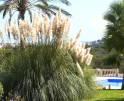 01-319 riesige luxus Finca Mallorca Osten Vorschaubild 9