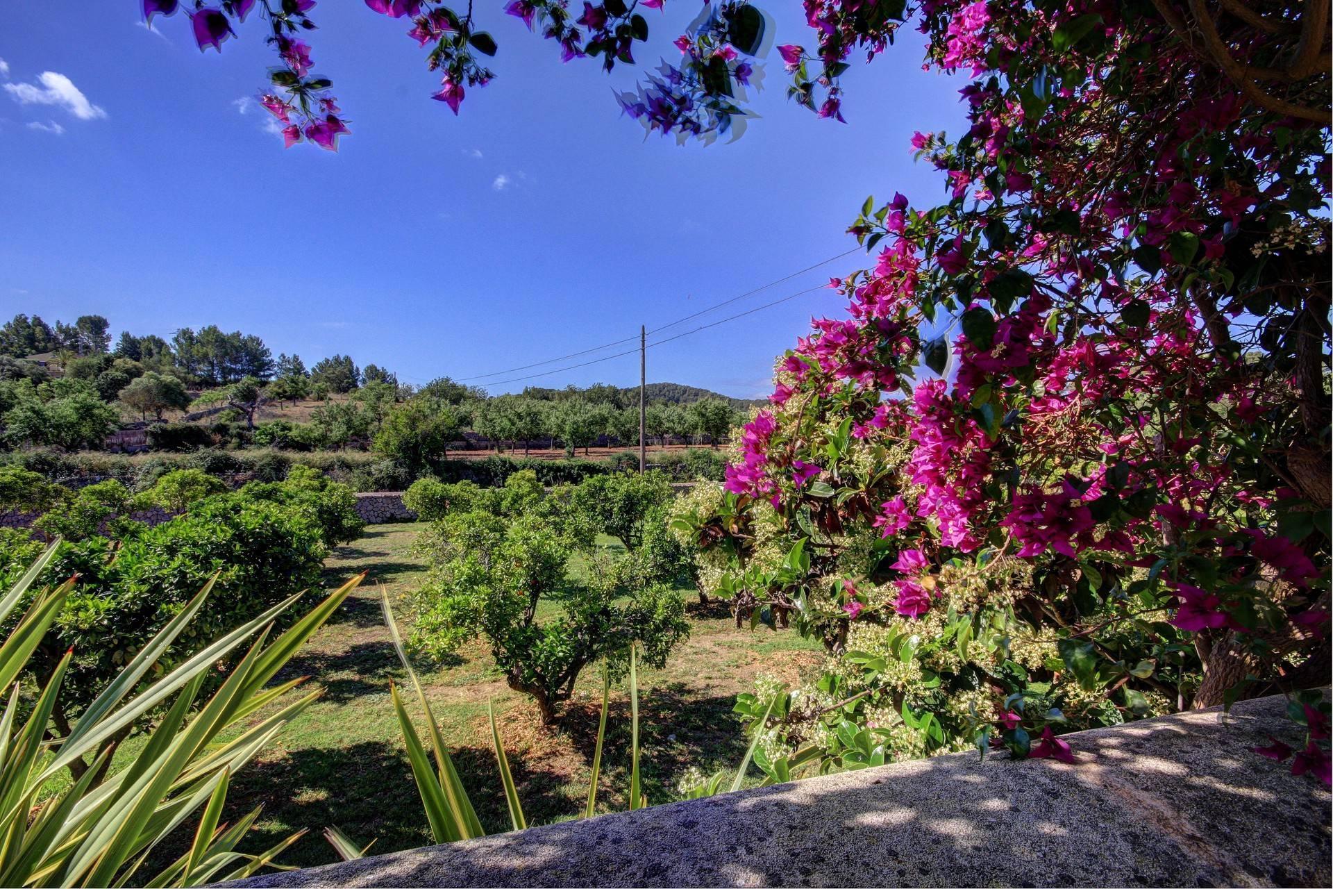 01-19 Elegante Finca Mallorca Südwesten Bild 16