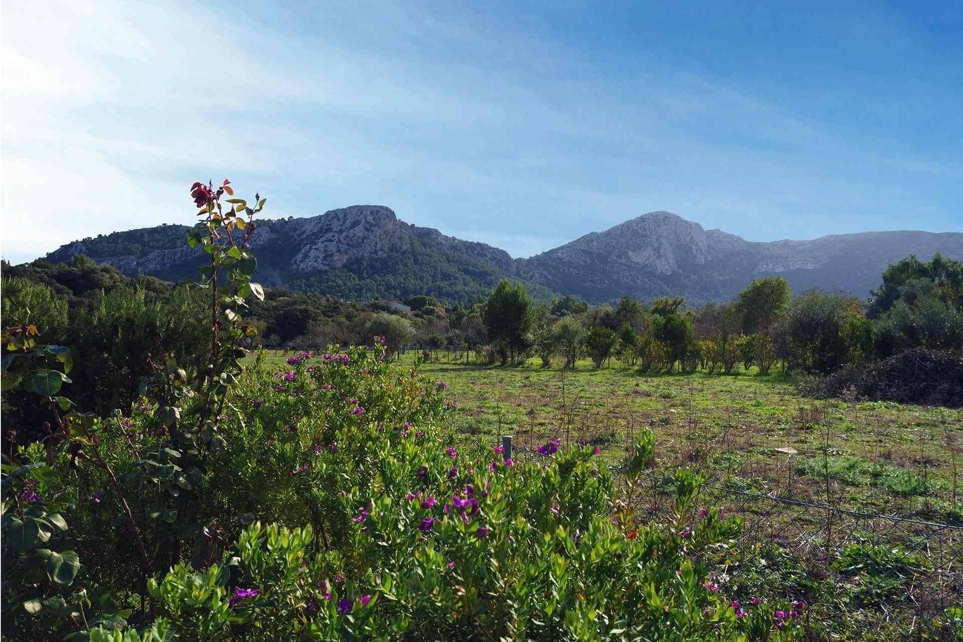 01-284 Finca mit Ausblick Mallorca Norden Bild 21