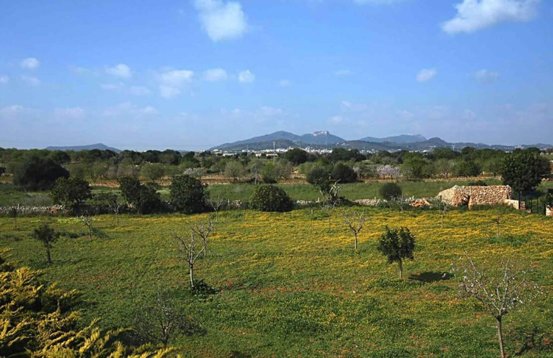 01-38 Mallorquinische Finca Mallorca Osten Bild 28