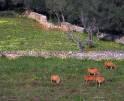01-58 Moderne Finca Mallorca Osten Vorschaubild 29