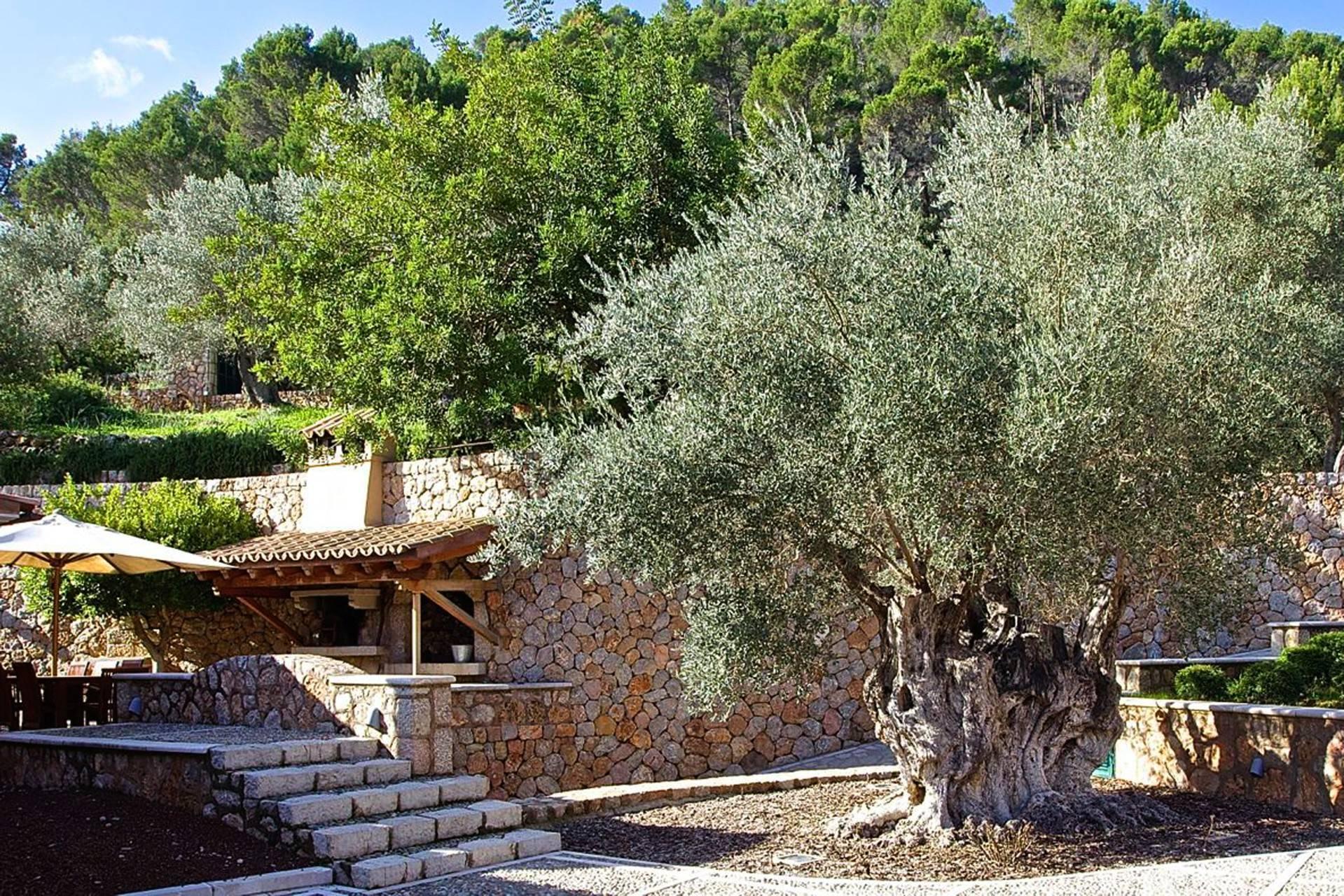 01-119 Exklusive Finca Mallorca Südwesten Bild 31