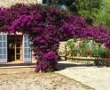01-147 idyllische Finca Mallorca Osten Vorschaubild 33