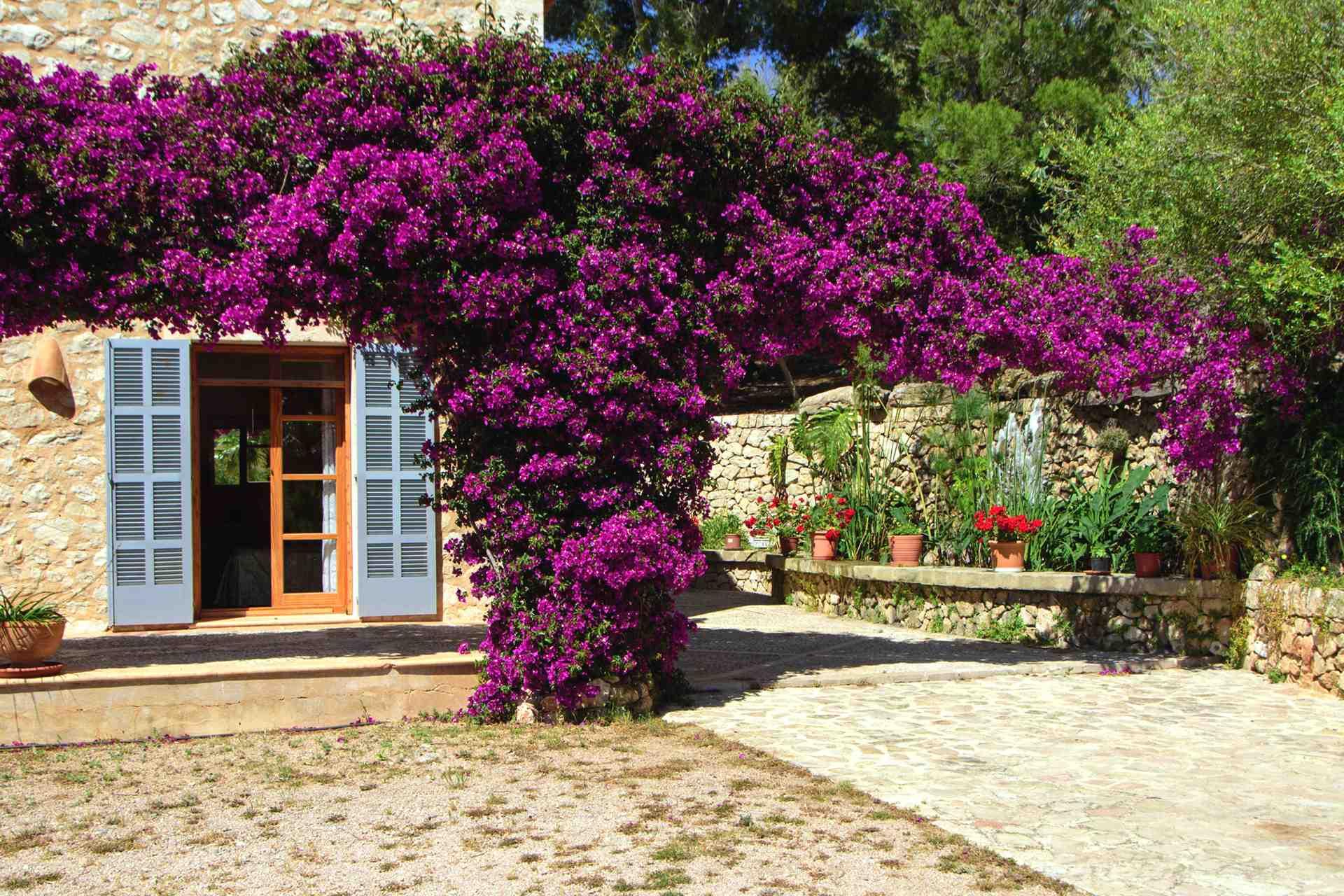 01-147 idyllische Finca Mallorca Osten Bild 33