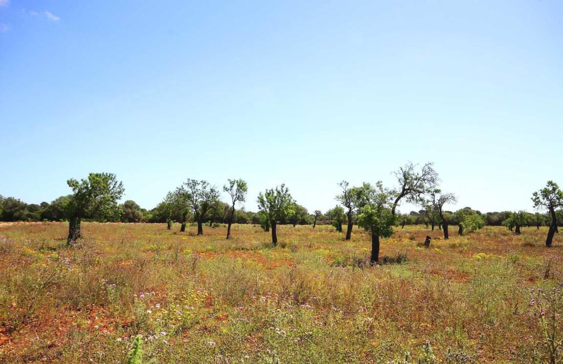 01-96 großzügige Finca Mallorca Süden Bild 33