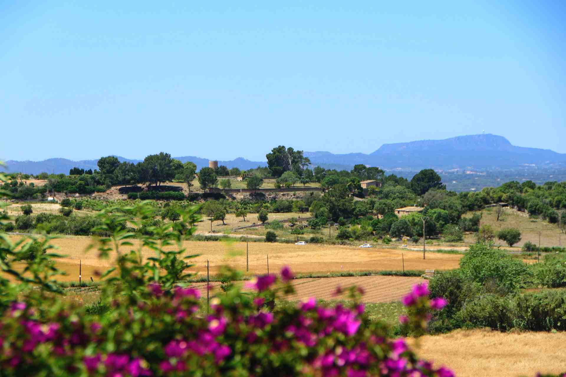 01-147 idyllische Finca Mallorca Osten Bild 34