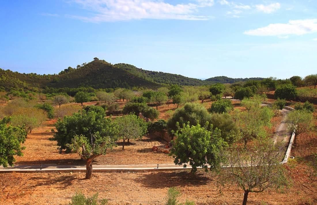 01-159 Ländliches Ferienhaus Mallorca Osten Bild 36