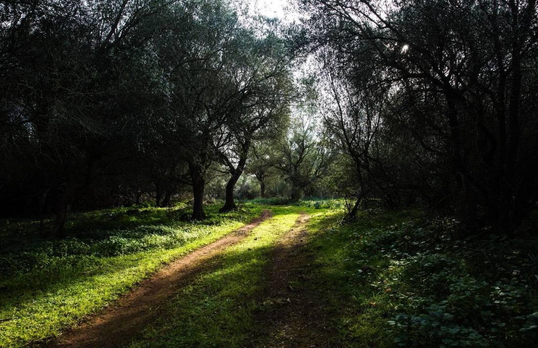 01-103 traumhafte Finca Mallorca Nordosten Bild 46