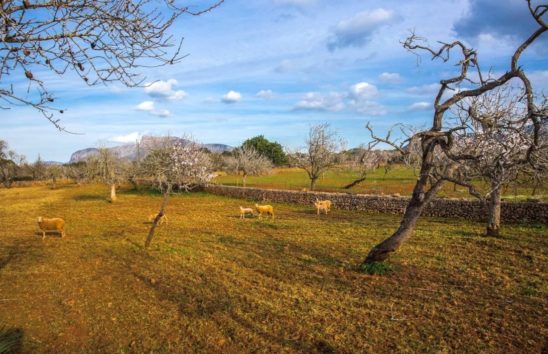 01-103 traumhafte Finca Mallorca Nordosten Bild 47