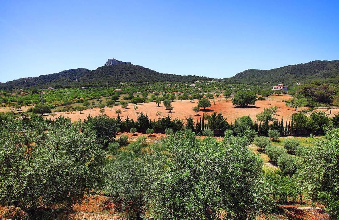 01-138 wintertaugliche Finca  Mallorca Osten Bild 46