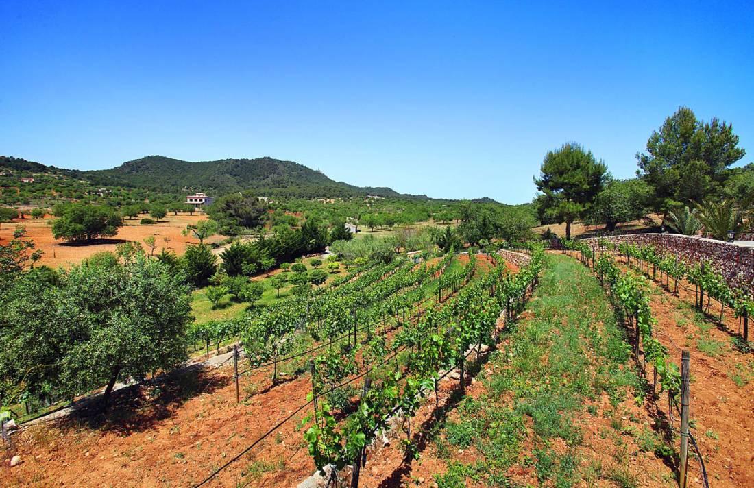 01-138 wintertaugliche Finca  Mallorca Osten Bild 47