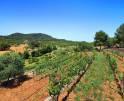 01-138 wintertaugliche Finca  Mallorca Osten Vorschaubild 47