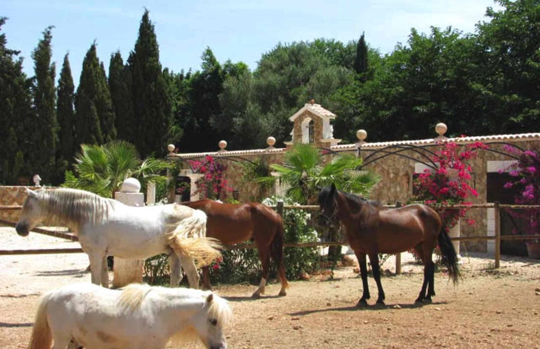 01-87 Luxuriöse Finca Mallorca Zentrum Bild 50