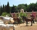 01-87 Luxurious Finca Mallorca Center Vorschaubild 48