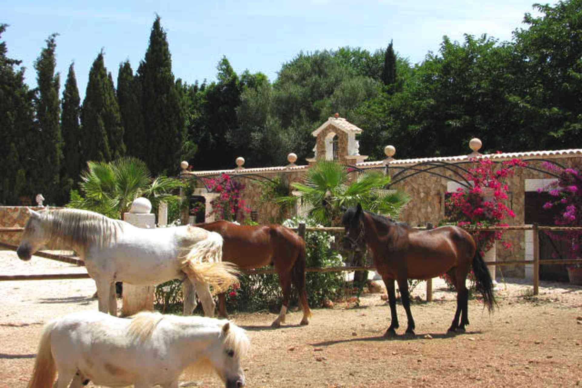 01-87 Luxuriöse Finca Mallorca Zentrum Bild 48