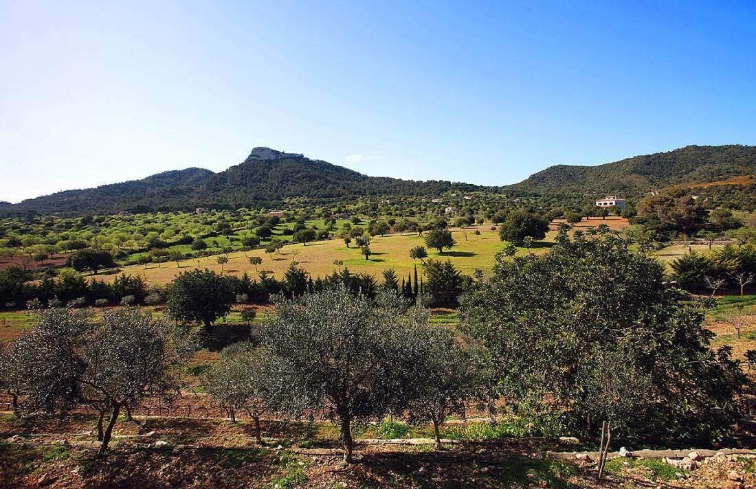 01-138 wintertaugliche Finca  Mallorca Osten Bild 49
