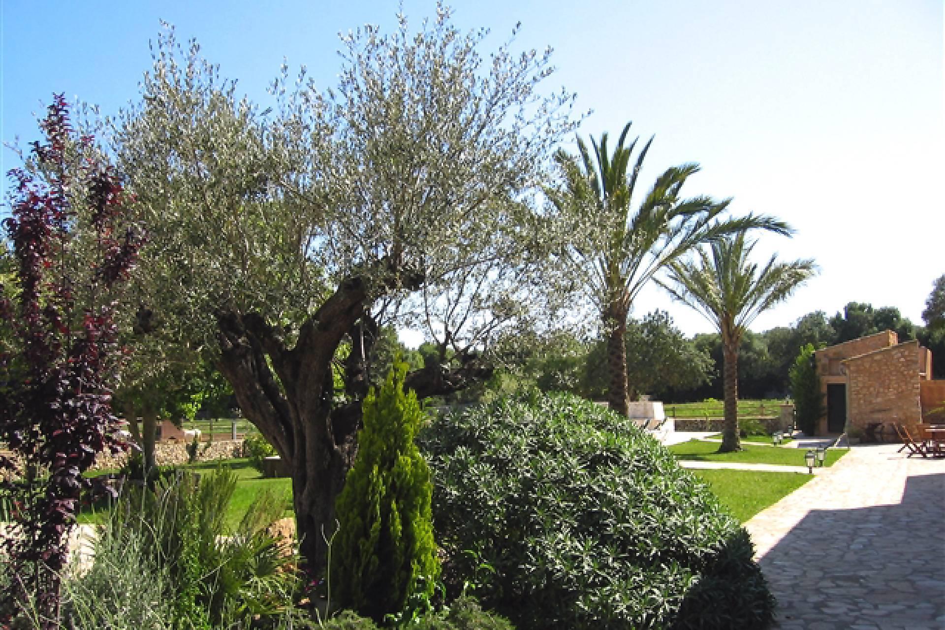 01-66 Rustikale Finca Mallorca Osten Bild 10