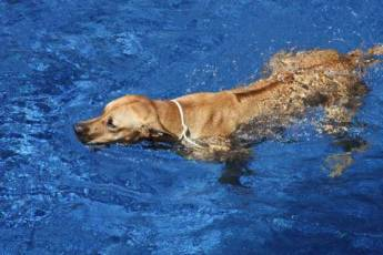 Hund-im-Pool