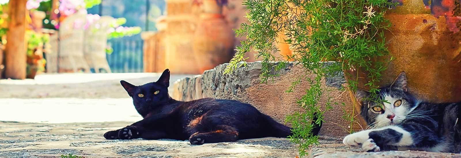 luxus Finca in Bunyola auf Mallorca mieten