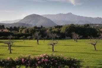 Mallorca-Ferienhaus-Pollenca-mieten-28_1