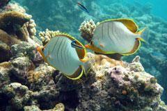 Mallorca-unter-Wasser
